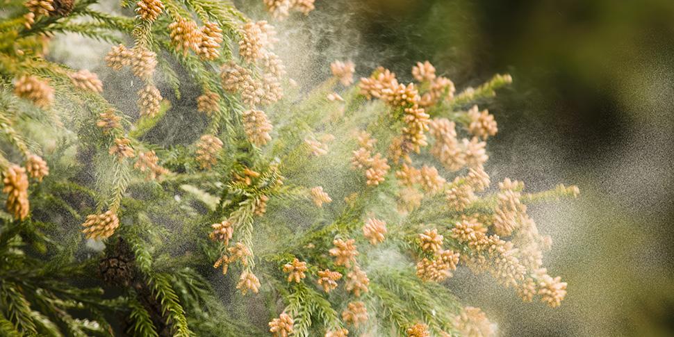 身近な水で花粉症対策をしよう!